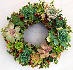 Succulent Wreath ... LOVE LOVE LOVE!!