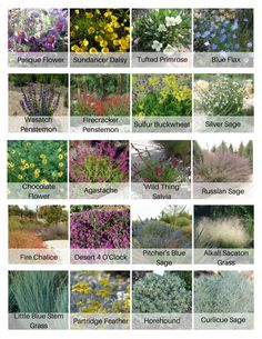 Mostly utah native, ultra low water plants, organized in order of bloom time, for your rock garden or xeriscape - Curb Appeal Gardening Low Water Landscaping, Texas Landscaping, Landscaping With Rocks, Landscaping Plants, Front Yard Landscaping, Xeriscape Plants, High Desert Landscaping, Landscaping Ideas, Dry Garden