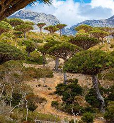 Socotra, Mount Rainier, Lineup, Mysterious, Island, Adventure, Mountains, Nature, Travel