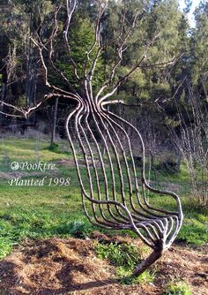 Living grown garden chair - Yeah, it is a tree, a living tree. The process of shaping trees is called pooktre. This is done by gradually shaping the trees  as they grow along predetermined designs.
