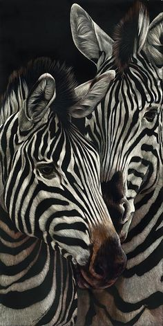 A pair of Zebras --let me tell you something!