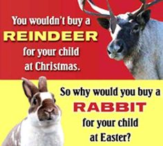 House Rabbit Society of Missouri St. Louis