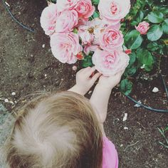 Rose meets Rose Instagram Life, Rose, Pink, Roses, Pink Roses