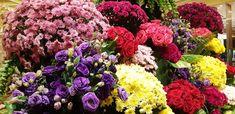 Resorts World Manila, Philippines, Videos, Vegetables, Floral, Flowers, Plants, Vegetable Recipes, Plant
