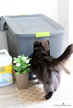 10 Amazing Ways to Spoil Your Cat 10 Amazing Ways to Spoil Your Cat Cat home decor Ideas DIY Kitty Litter Box<br> Fun DIY cat toys, kitty litter ideas and other amazing ideas to spoil your cat! Diy Cat Toys, Cool Cat Toys, Hiding Cat Litter Box, Diy Litter Box, Kitty Litter Boxes, Litter Box Enclosure, Lit Chat Diy, Diy Jouet Pour Chat, Cat Apartment