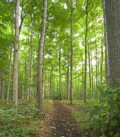 The Sacred Grove.  Parker & I went here with our son Ben, when we picked him up from his mission.