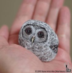 Japanese Artist Turns Stones Into Cute Animals You Can Hold In The Palm Of Your Hand - I Can Has Cheezburger? Painted Rock Animals, Painted Rocks, Animal Paintings, Animal Drawings, Owl Rocks, Ladybug Rocks, Owl Pictures, Beautiful Owl, Rock Painting Designs