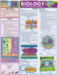 Afbeelding van http://www.designinfographics.com/infographics-images/the-basic-principles-of-biology.png.