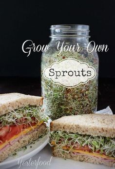 grow your own sprouts, homesteading