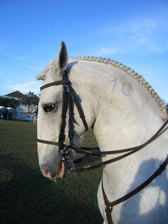 Cavalo de Raça Lusitana - Portugal