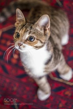 Kitten by groblerinus. @go4fotos