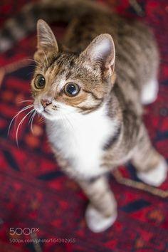 Kitten by groblerinus #animals #animal #pet #pets #animales #animallovers #photooftheday #amazing #picoftheday