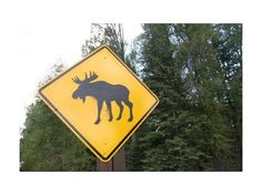 Moose Crossing Sign in Yellowstone National Park Warning