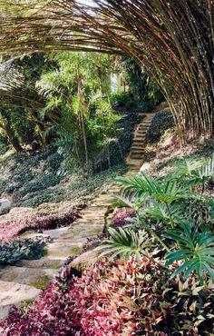 O guaimbê (Philodendron bipinnatifidum) se adapta à meia-sombra e ao sol pleno. Boa para forrar canteiros, a trapoeraba (Tradescantia zebrin...