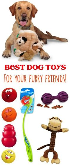 Best Dog Toys for your Furry Friends - Toys your Dogs will LOVE!   TheFrugalGirls.com
