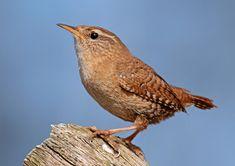 Die 245 Besten Bilder Von Vogel Bugs Norway Und Bird