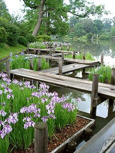 Missouri Botanic Garden. I would love a raised path like this over a water garden
