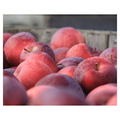 Apples Photograph Farmhouse Decor. Fall Harvest Home Decor. Nature... ($18) ❤ liked on Polyvore featuring home, home decor, wall art, apple home decor, red home accessories, farmhouse home decor, autumn home decor and red home decor