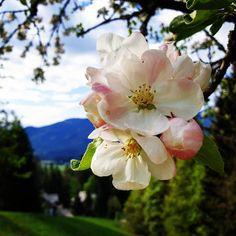 """Gefällt 0 Mal, 0 Kommentare - Helping Flowers (@helping_flowers_essenzen) auf Instagram: """"Wunderschönen Muttertag euch allen! Im Hintergrund seht ihr unsere Seminarhäuser. Die…"""" Rose, Flowers, Plants, Instagram, Mother's Day, Nice Asses, Pink, Plant, Roses"""