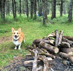If you have a picture of your dog on an epic outdoor adventure please post in the comments below. Funny Dog Images, Funny Dogs, Outside Dogs, Fire Wood, Outdoor Dog, Dog Mom, Best Dogs, Dogs And Puppies, Your Dog