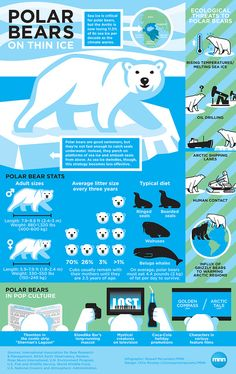 The Polar Ice-caps are melting, rendering the Polar bears and the other Arctic animals homeless. Polar bears have ruled the Arctic for years, but now they& struggling to keep up as the region undergoes a dramatic transformation. Climate Warming, Polar Animals, Wild Animals, Baby Animals, On Thin Ice, Sea Ice, Thinking Day, Animal Facts, Marine Biology