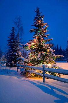 colorful lights, winter, #snow, forest, glitter, wonderful, harmony, fir tree - bunte Lichter, Winter, Schnee, Wald, Glitzer, #wundervoll, Harmonie, Tannenbaum