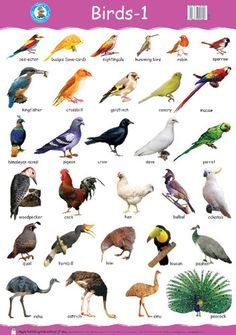 Image result for birds with names