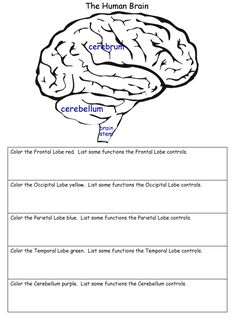 Ask a biologist coloring page whats in your brain worksheet science worksheets ccuart Choice Image