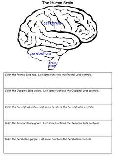 1000+ ideas about The Human Brain on Pinterest | The Brain ...