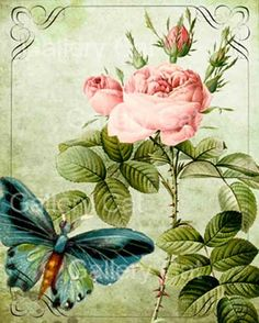 Digital Collage Sheet #8 Old English Roses with Butterfly This listing is for a romantic collection of Roses and butterflies with calligraphy