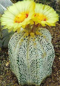 Amazing Unusual Plants To Grow In Your Garden Weird Plants, Unusual Plants, Rare Plants, Exotic Plants, Unusual Flowers, Rare Flowers, Beautiful Flowers, Succulent Gardening, Planting Succulents
