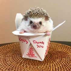 Hedgehog and Noodle Box: the cutest thing in the world! Happy Hedgehog, Hedgehog Pet, Cute Hedgehog, Cute Creatures, Beautiful Creatures, Animals Beautiful, Cute Little Animals, Cute Funny Animals, Baby Animals Pictures