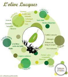 Infographie sur l'olive Lucques - delicesdinities.fr