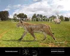 Stone Age Animals, Extinct Animals, Prehistoric Creatures, Animals Images, Fauna, Jurassic Park, Mammals, North America, Beast