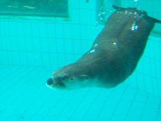 immersions totale dans les eaux de la loutre