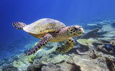 Was mit Google Street View an Land geht, funktioniert jetzt auch unter Wasser. Taucht mit uns ab, die Bilder sind wirklich wunderschön!