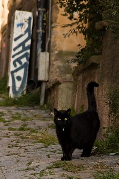 black cat.. Reminder of Figaro, (other cats: Pernille, Berlious, Sot, Sassy, My, Papprika, Nala og Simba)