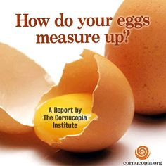 14 Best Organic Egg Report and Scorecard images in 2016