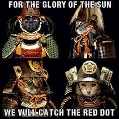 kitty warriors