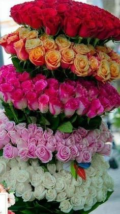 1 million+ Stunning Free Images to Use Anywhere Beautiful Flowers Photos, Beautiful Flowers Wallpapers, Exotic Flowers, Flower Photos, Beautiful Roses, Pretty Flowers, Creative Flower Arrangements, Beautiful Flower Arrangements, Good Morning Flowers Gif