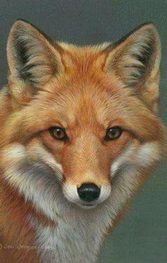 77 Best حيوانات مفترسة - Predator animals images  63f7135738b