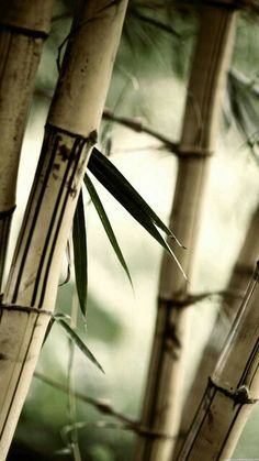 Bamboo . green and brown ✿