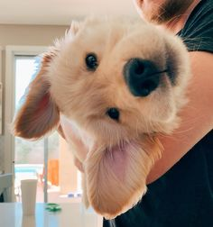 🐶 🐶 ----------- Check out more cute animals ----------- Cute Little Animals, Cute Funny Animals, Cute Dogs And Puppies, I Love Dogs, Doggies, Puppies With Babies, Puppies Puppies, Teacup Puppies, Retriever Puppies