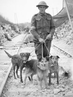 ANZAC Day Villers-Bretonneux, France, Corporate James Coull with dogs of the No. 3 Messenger Dog Section. Left to right, the dogs are Nell, Trick and Buller. Military Working Dogs, Military Dogs, Police Dogs, Australia Animals, War Dogs, Vintage Dog, World War One, Service Dogs, Dog Photos