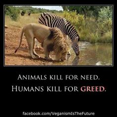 """Animals kill for need Humans kill for greed"". I seriously don't know how much longer I can continue to eat meat in this world we live in. Amazing Animals, Animals Beautiful, Save Animals, Animals And Pets, Animals Planet, Exotic Animals, Save Our Earth, Vegan Quotes, Stop Animal Cruelty"