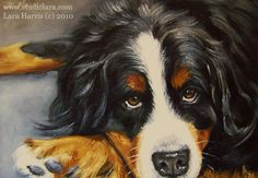 A Vintage Touch: Meet Mosby the Bernese Mountain Dog...Portrait Painting in OIL by LARA