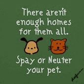 AMEN!!  Four million cats and dogs—about one every eight seconds—are put down in U.S. shelters each year. Often these animals are the offspring of cherished family pets. Spay/neuter is a proven way to reduce pet overpopulation, ensuring that every pet has a family to love them.