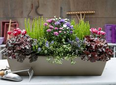 Herbstbepflanzung Balkon - New Ideas Balcony Flower Box, Window Box Flowers, Flower Boxes, Fall Planters, Flower Planters, Container Gardening Vegetables, Container Plants, Backyard Garden Design, Diy Garden Decor