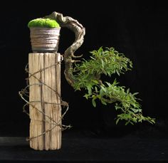 Yamadori and Bonsai material from Tony Tickle Indoor Bonsai, Bonsai Plants, Bonsai Garden, Bonsai Trees, Bougainvillea Bonsai, Ikebana, Bonsai Meaning, Bonsai Tree Types, Miniature Trees