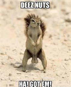 Deez nuts, ha, got em,squirrel, big testicles, nuts, meme